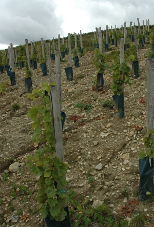 Terres blanches - Vignoble de Sancerre - Photo Michel CRIVELLARO